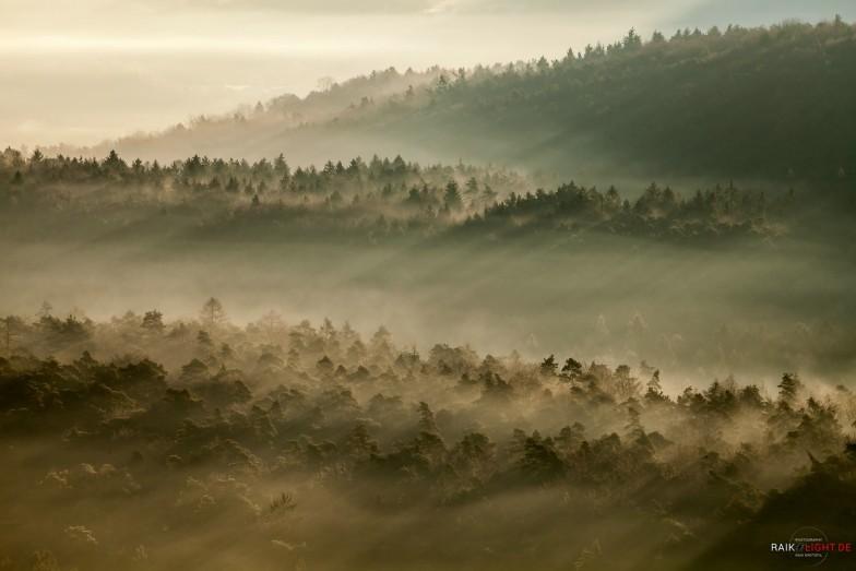 Deutschland Pfalz Winter Februar 2014 Lindelbrunn Nebel