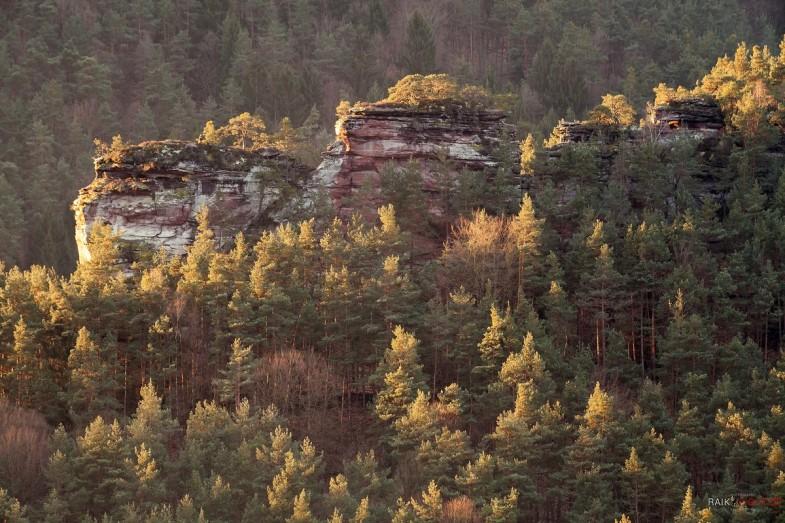 Dickenberg, Sprinzel, Busenberg, Pfälzerwald