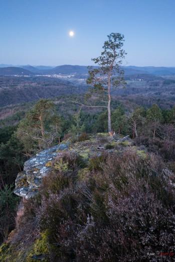 Kleiner Hahnstein, Pfälzerwald