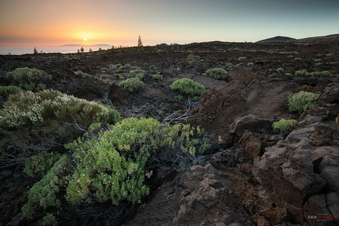 Corona Forestal, Teide, Teneriffa
