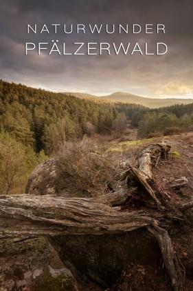 Kalender Naturwunder Naturpark Pfälzerwald