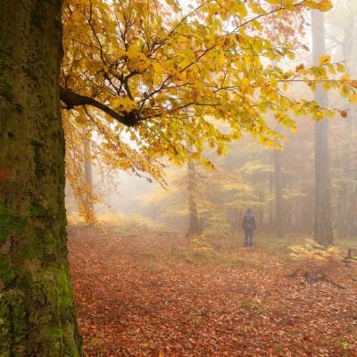 Pfälzerwald im Herbst