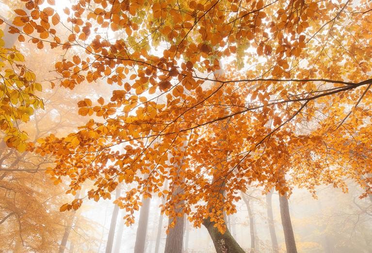 Pfälzerwald im Herbst Nebel Wandern Edenkoben Dahner Felsenland