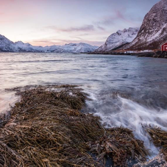 Gimsøy - Lofoten