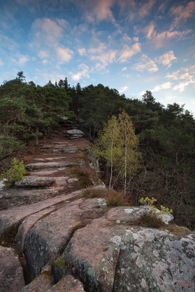 Wachtfelsen - Pfälzerwald