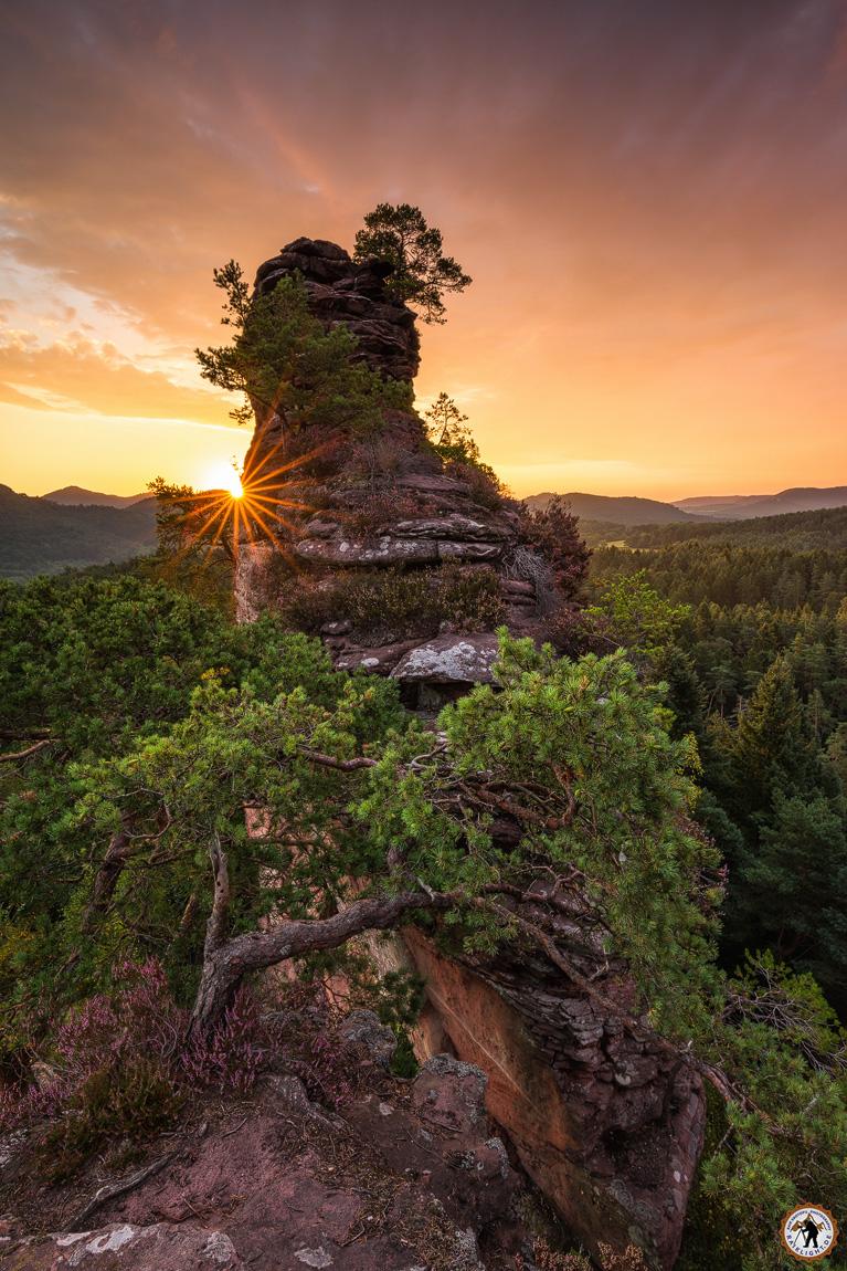 Lämmerfelsen - Pfälzerwald