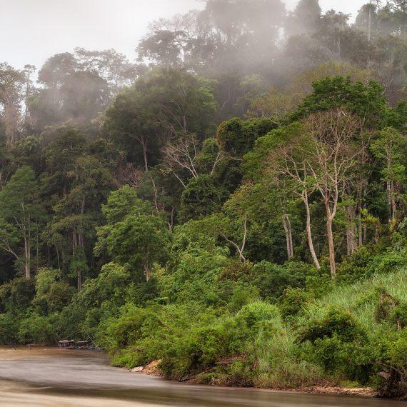 Taman Negara Nationalpark Rainforest Malaysia