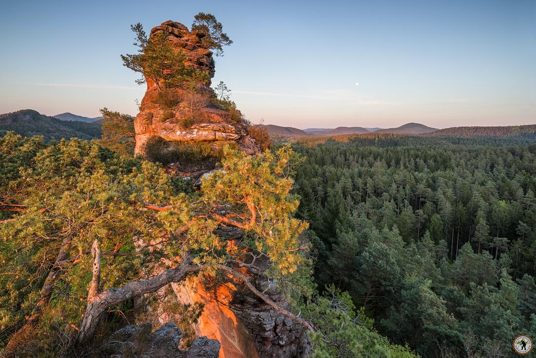Lämmerfelsen Pfälzerwald Dahn