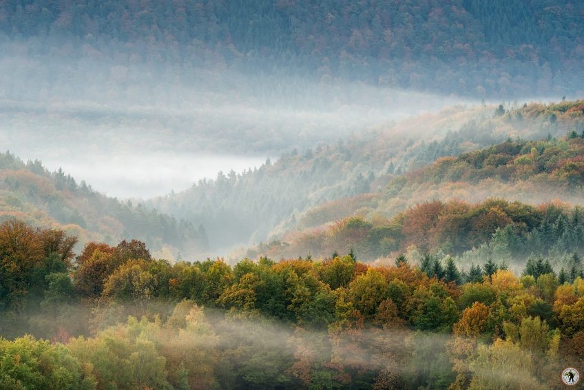 Pfälzerwald