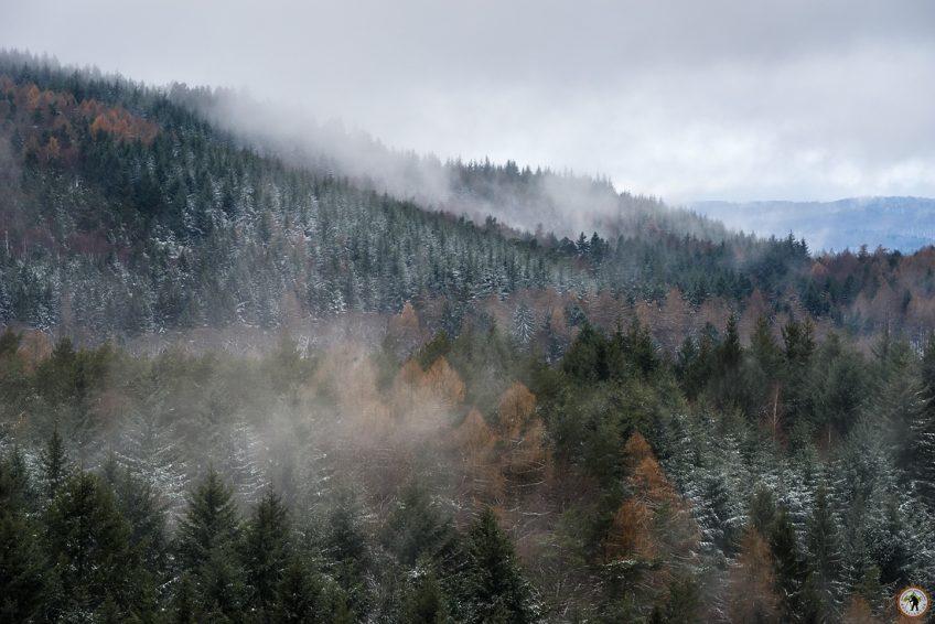 Pfälzerwald Winterkleid