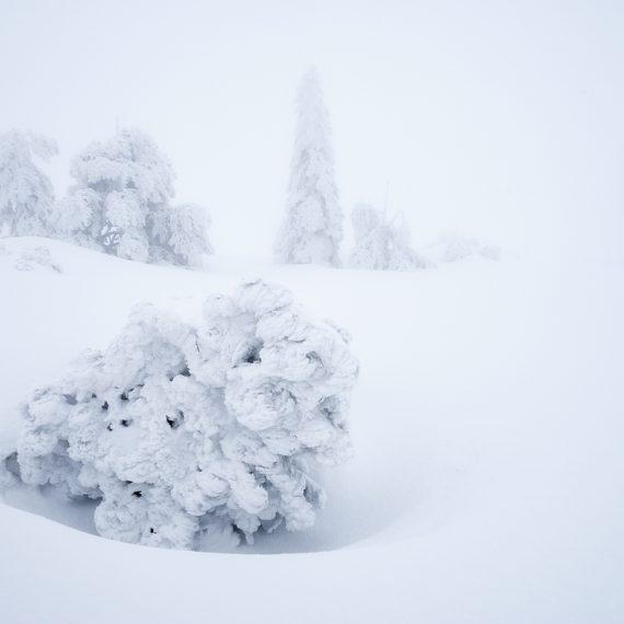 Schwarzwald im Winter Hornisgrinde