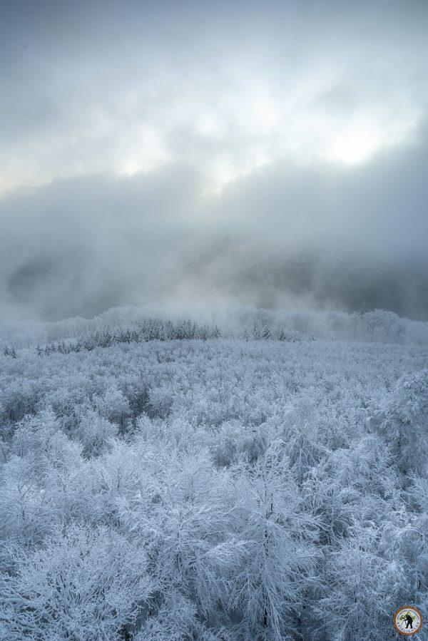 Pfälzerwald im Winter