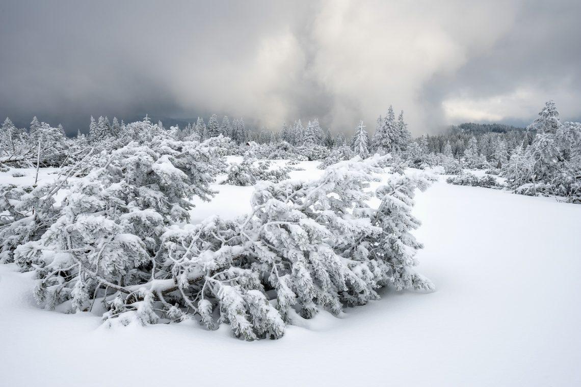 Winter im Schwarzwald am Schliffkop