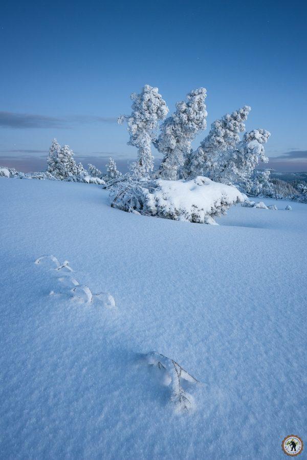 Schliffkop, Winter, Schnee, Wandern, Schwarzwald