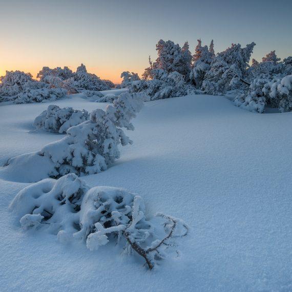 Schliffkop, Winter, Schnee, Wander, Schwarzwald