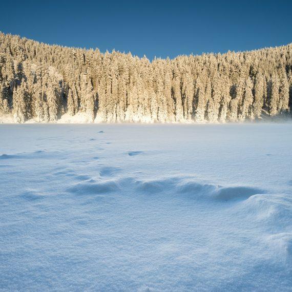 Mummelsee, Winter, Schwarzwald, Schnee, Wadern