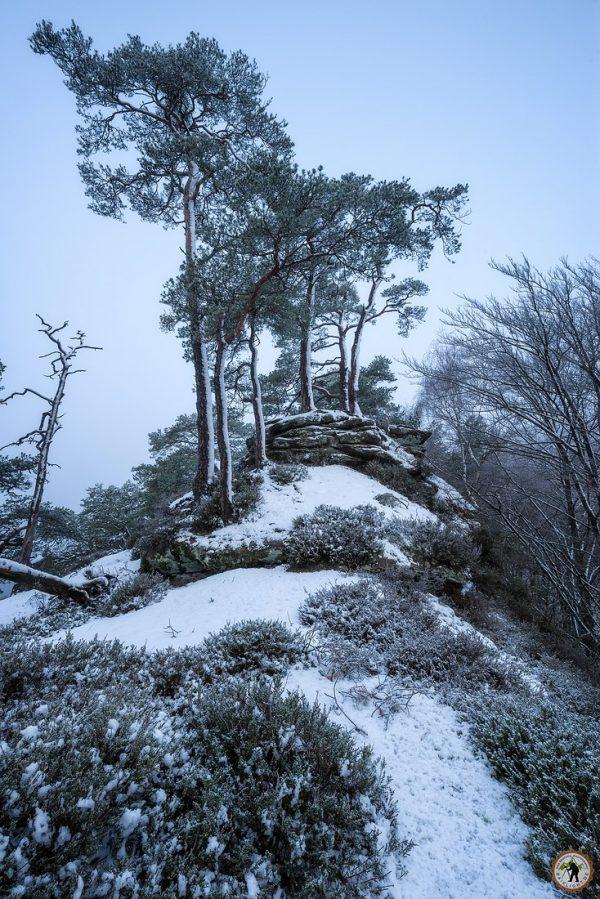 Winterbäume Haferfelsen Pfälzerwald Dahn