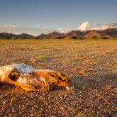Solitaire Death, Namibia Namib