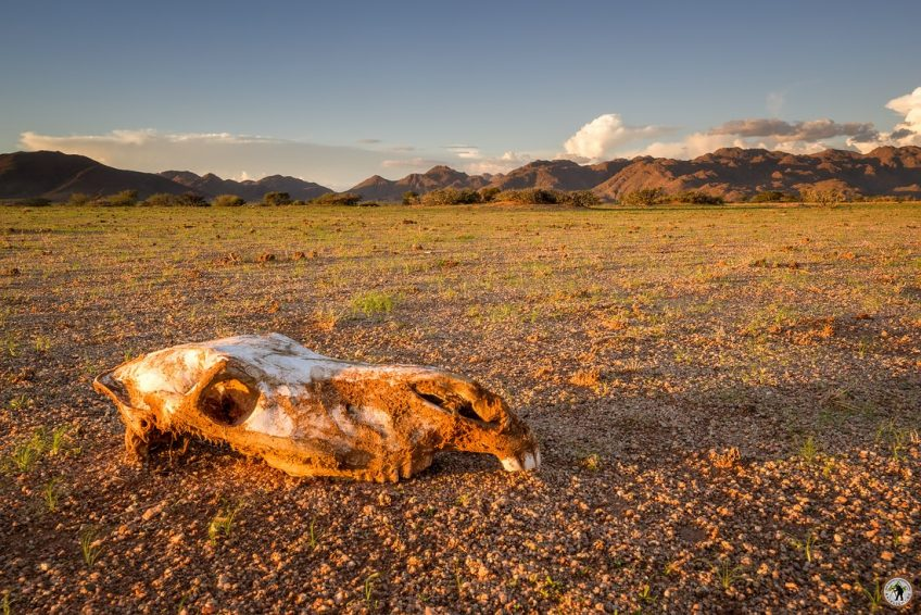Solitaire Death, Namibia Namib