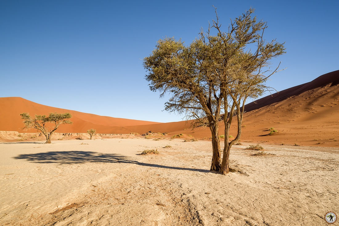 Deadvlei green Tree