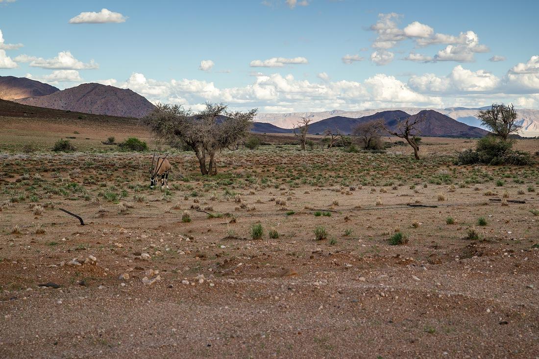 am Rande der Kalahari © Raik Krotofil