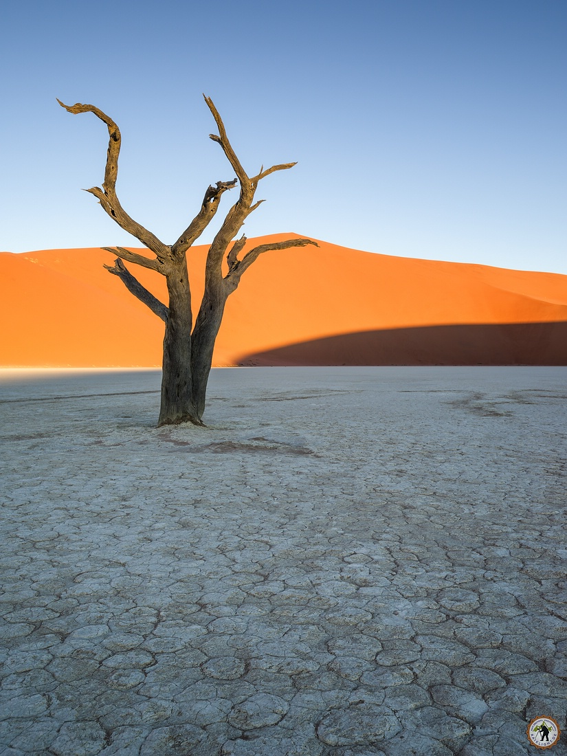 Deadvlei Tree Namib