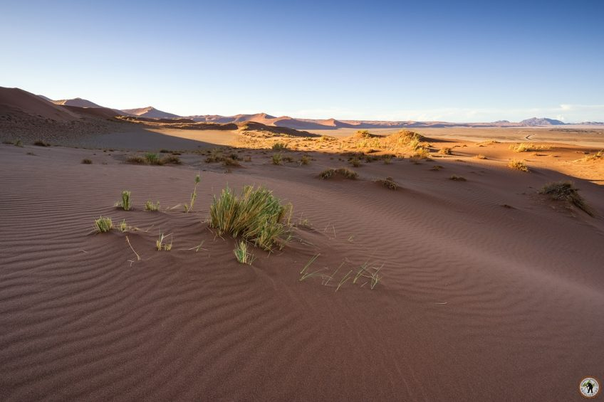 Dünen Namib