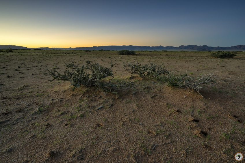 Solitaire Morning Namibia Namib