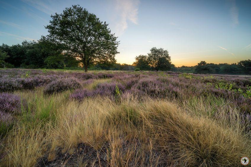 Mehlinger Heide