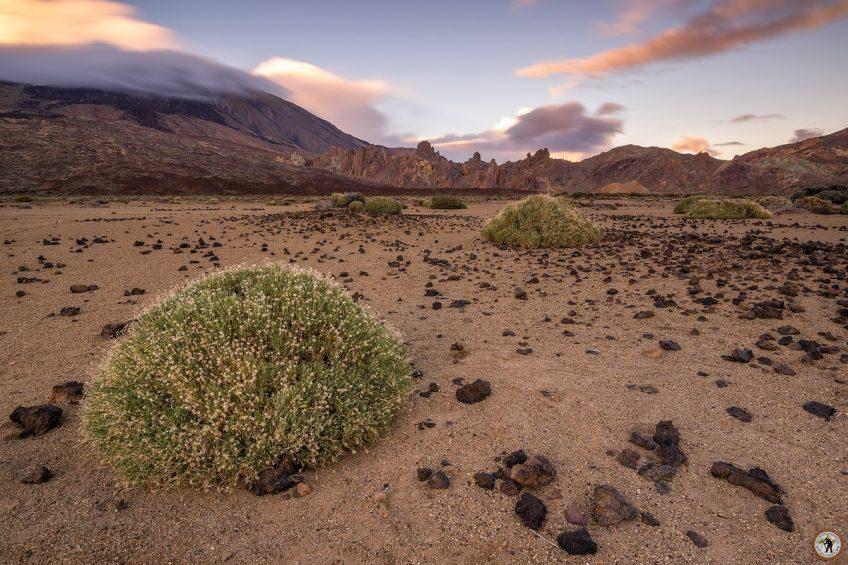Teide mit Schnee Teneriffa