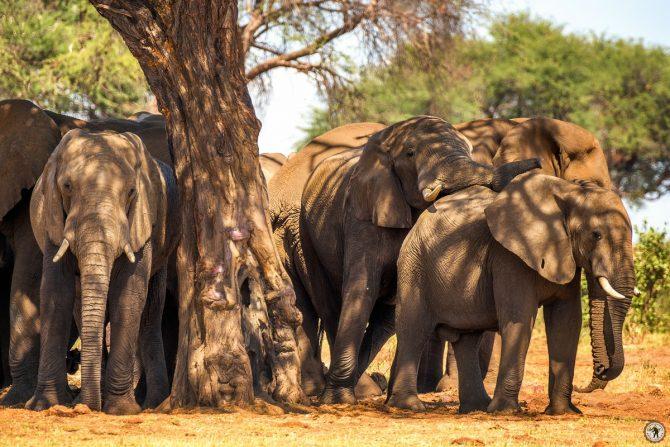 Elefanten Caprivi Namibia