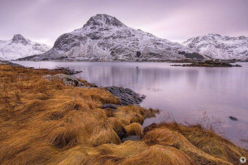 Golden Gras, Lofoten