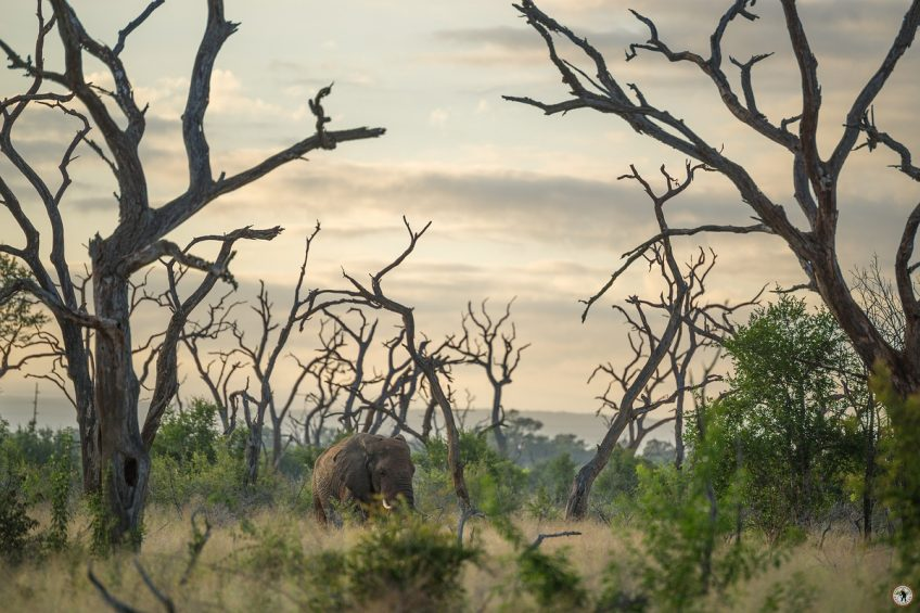 Hlane NP Swaziland