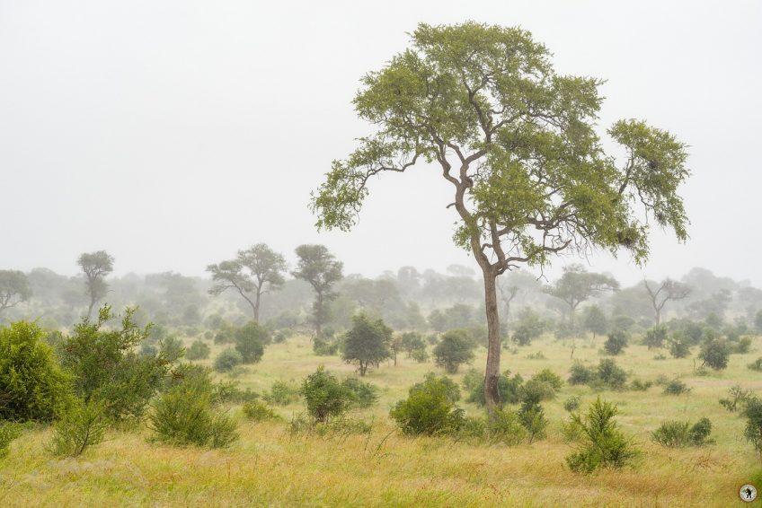 Kruger NP Regenzeit