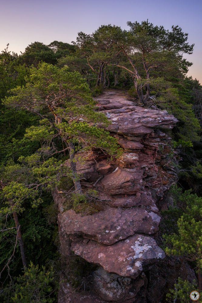 Felsen Pfälzerwald