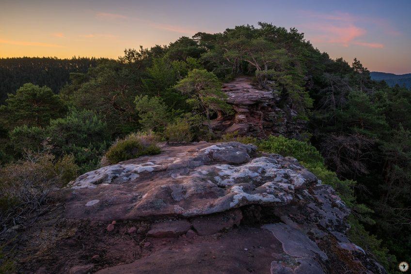 Felsen Pfälzerwald Morgenlicht Sommer