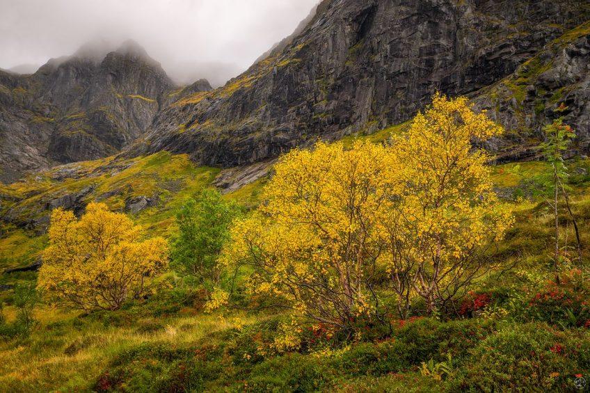 Herbst Lofoten Buntes Laub